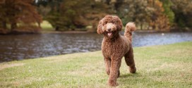 Dogs are more expressive when someone is looking | ScienceDaily