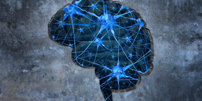 Researchers link defects in a nuclear receptor in the brain to autism spectrum disorders | Science Daily