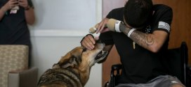 Wounded soldier and his injured military dog are together again, recovering in Texas | Army Times