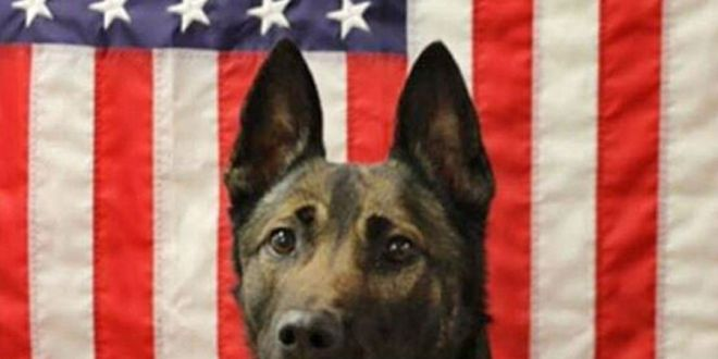 Army Ranger dog who died in Afghanistan saved soldiers' lives | Stars and Stripes
