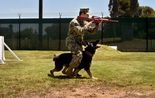 Military working dogs are stars of stamp unveiling at Naval Base Ventura County | VC Star