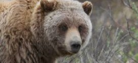 It's now OK to ward off grizzly bears with a paintball gun | For The Win