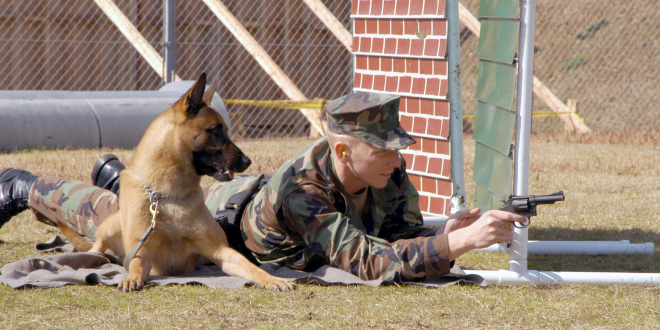 Inside story of Cairo, the dog that helped catch Osama bin Laden | NY Post