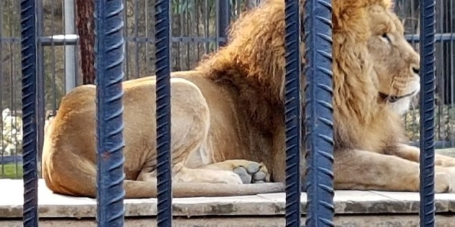 A German zoo is losing so much money from coronavirus closures that it may have to start feeding the animals to each other | Insider