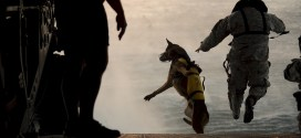 This heroic military dog ran through a hail of bullets to take out a gunman who had his team pinned down in a fierce firefight | Business Insider