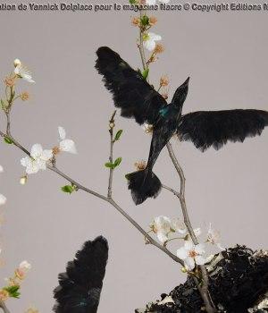 The black bird Soiéphémère Plumasserie