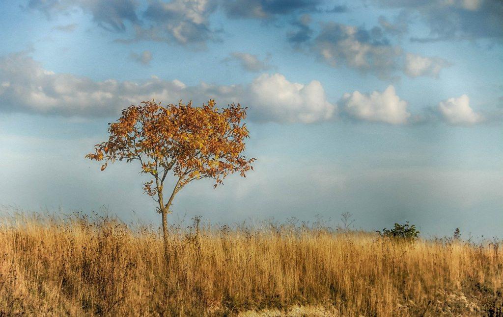 Climat et environnement