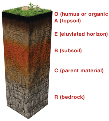 horizon diagram soil formation entity relationship software all about soils 4 kids the horizons are profile
