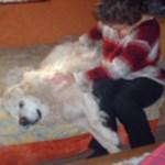 Magnétisme sur des chiens - Soins énergétiques alsace