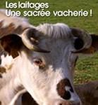 Les laitages sacrée vacherie - Soins énergétiques Alsace