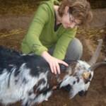 Soins sur chèvre | Soins énergétiques alsace