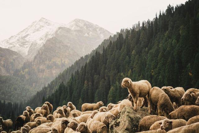 Panel – Les sujets pastoraux trouvés dans Éphésiens