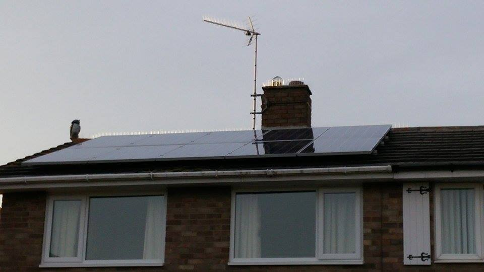 Solar Panel Cleaning And Bird Proofing On Fareham Home