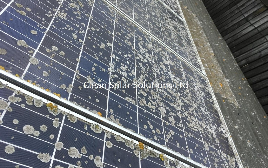 Solar Panel Cleaning Halesworth – Lichen Removal On A Farm