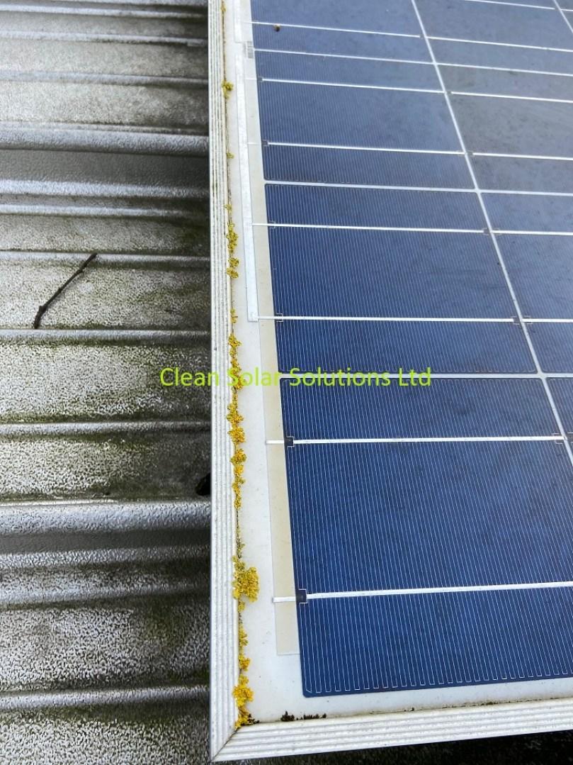 Lichen growing on solar panels