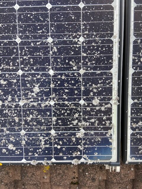 Solar Panel Cleaning & Lichen Removal On Gloucester Home