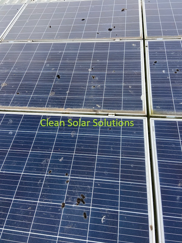 Solar panels covered in bird droppings