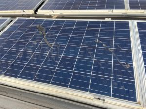 Bird droppings on solar panels