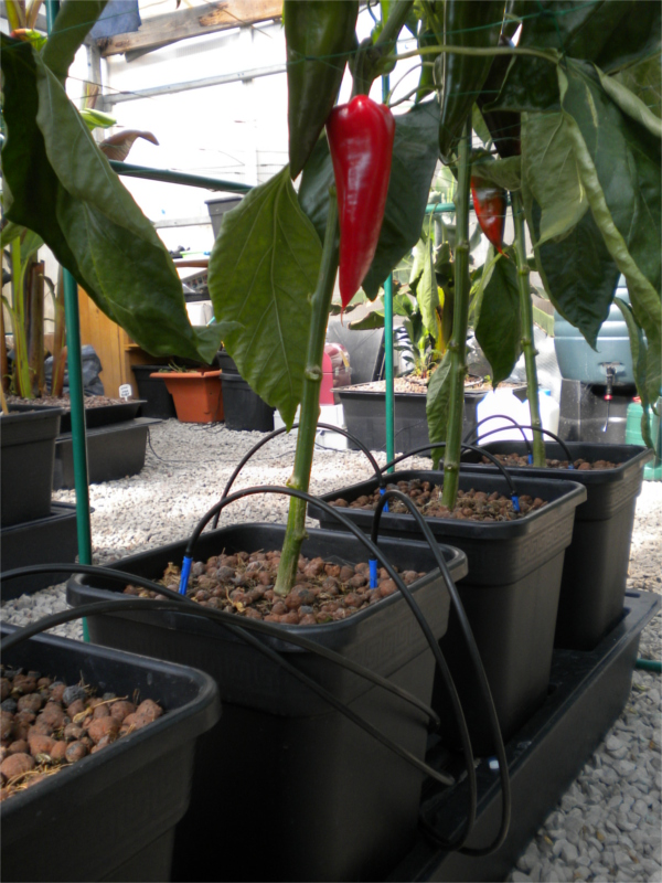 Solar Quadgrow Chili Planter