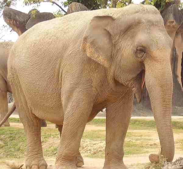 Not sure how the elephant will fare in the vote for state animal.