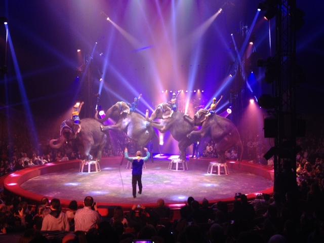 Elephants Cirque Gruss