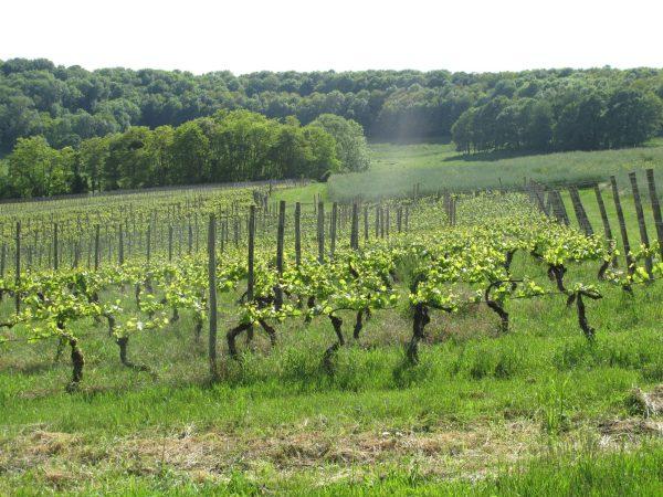 Vignobles Moselle