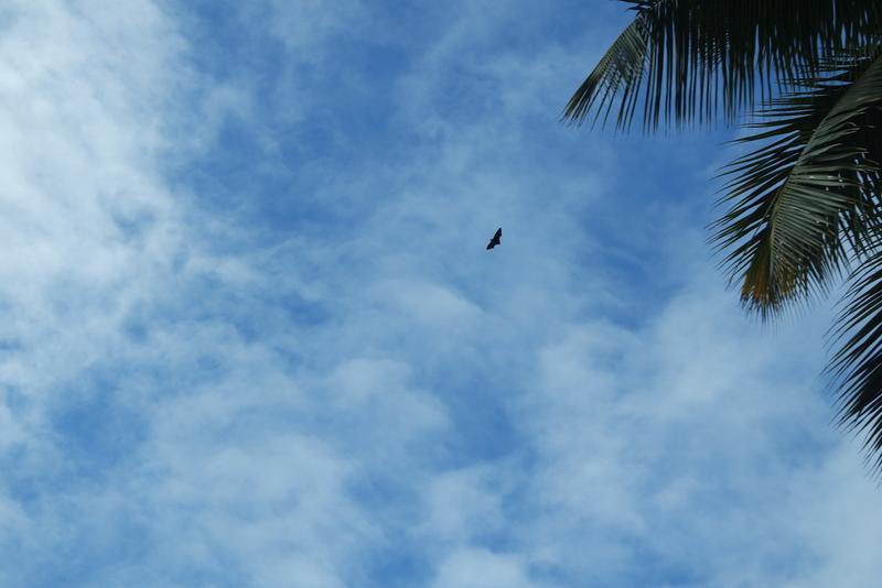 Faune Seychelles