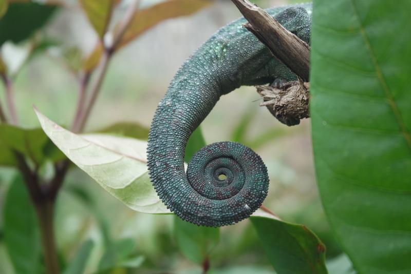 Ferme aux reptiles de Peyrieras Madagascar