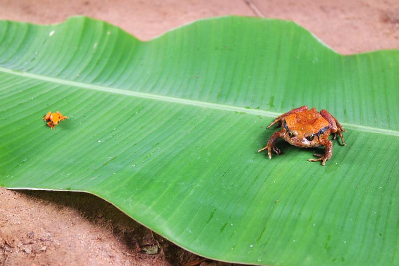 Reptiles Madagascar