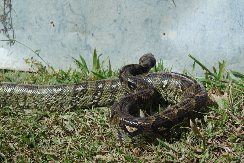 Serpent Madagascar