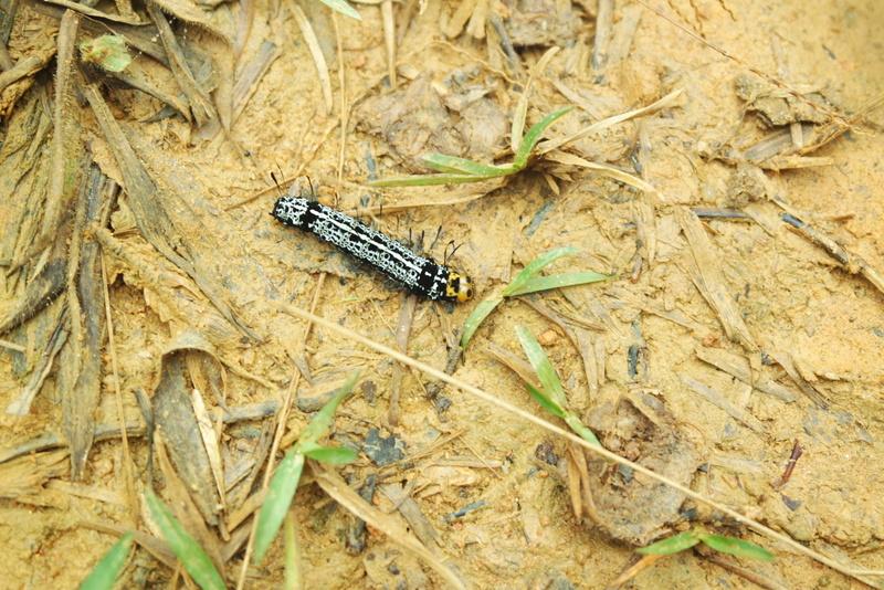 Insecte Madagascar