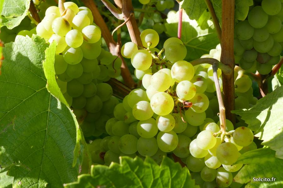Cité du vin Traben-Trarbach Rhenanie-Palatinat