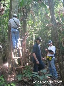Investigadores realizando el levantamiento de datos de diametros.   Foto: V. Vos