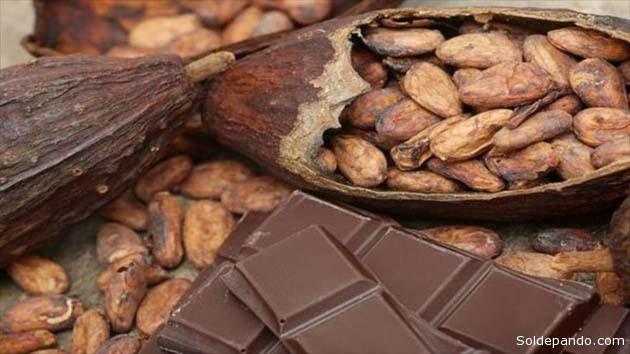 Comer chocolate es una experiencia placentera para muchos, pero la gran demanda del cacao y la recesión africana de este producto empuja a las transnacionales hacia los bosques de la Amazonia con cultivos agrícolas que destruyen el bosque.