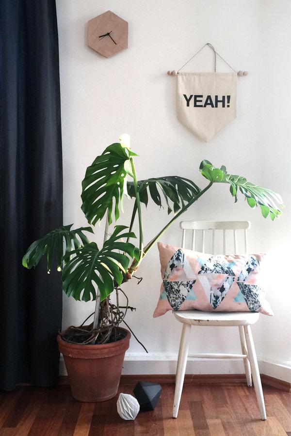 Monstera Fensterblatt  Bilder und Ideen mit der Trendpflanze