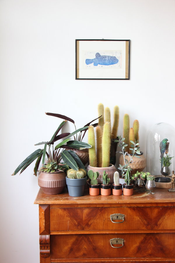 Kaktus Deko  Kaktus Bilder