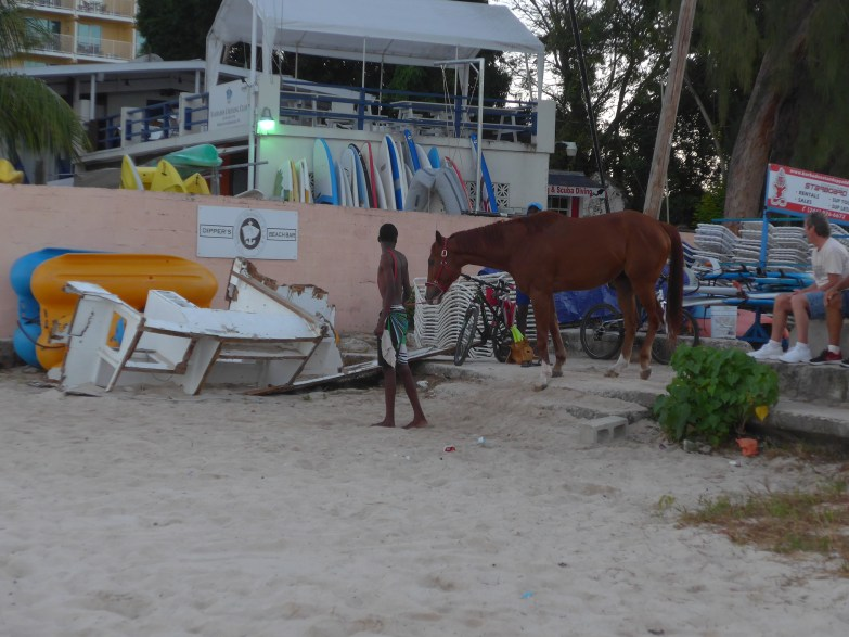 Racehorse arriving at Pebbles Beach