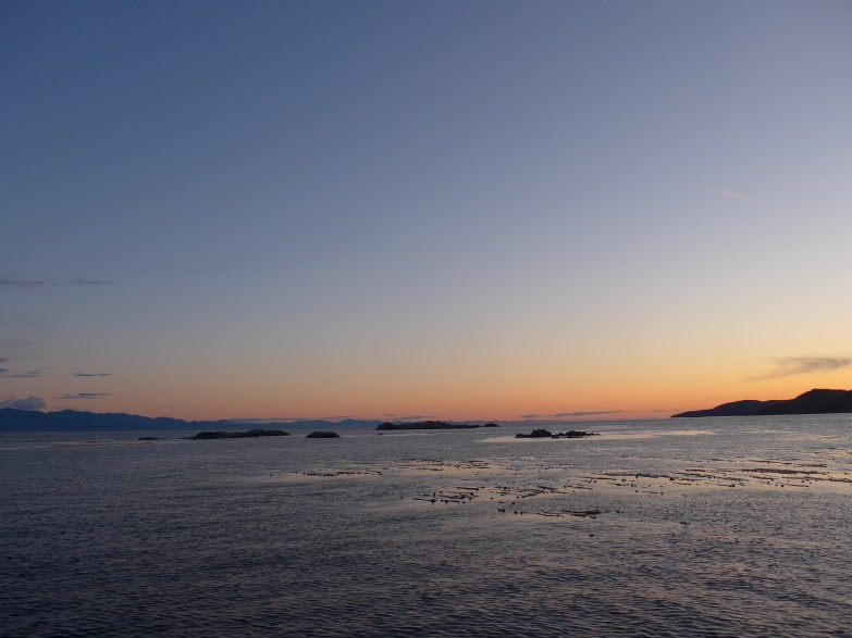 Whale Watching Sunset Tour