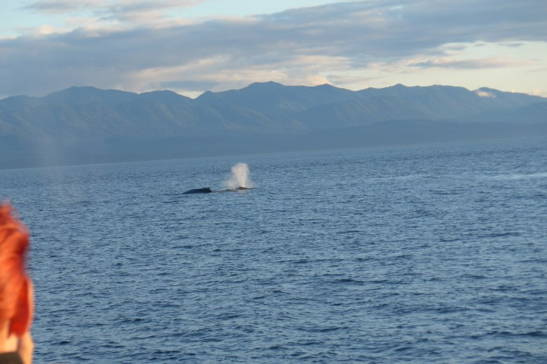 Whale watching tour in Victoria BC