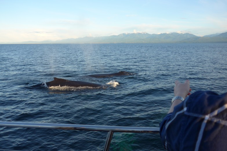 Whales up close in Victoria BC