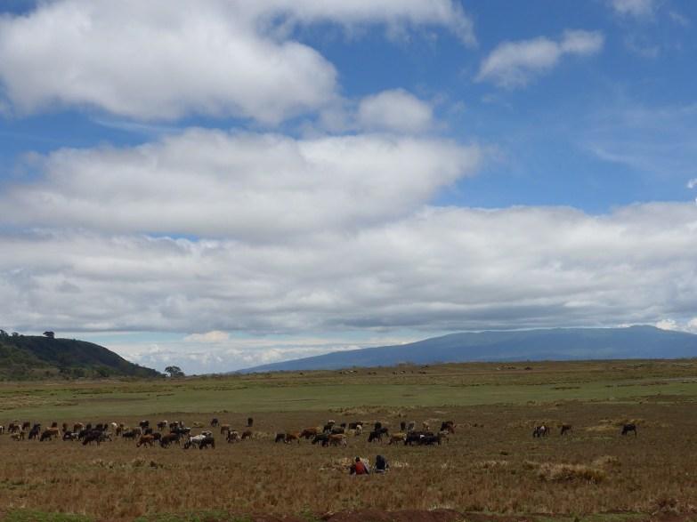 Maasai taking a break while cattle graze