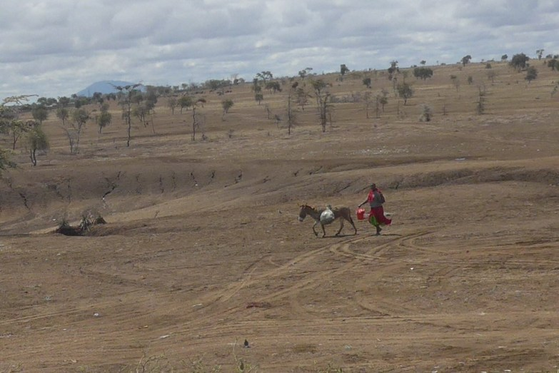 Maasai with donkey fetching water