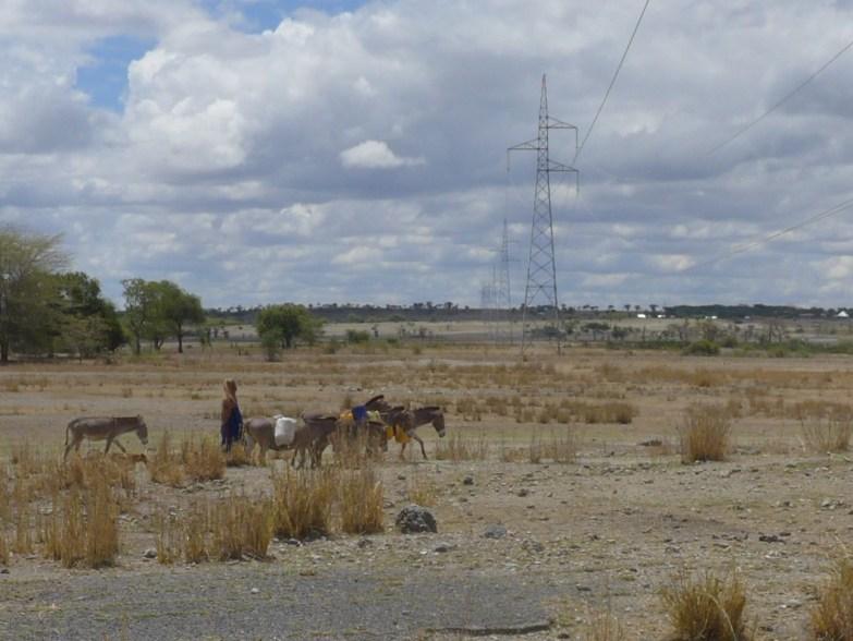 Maasai with donkeys