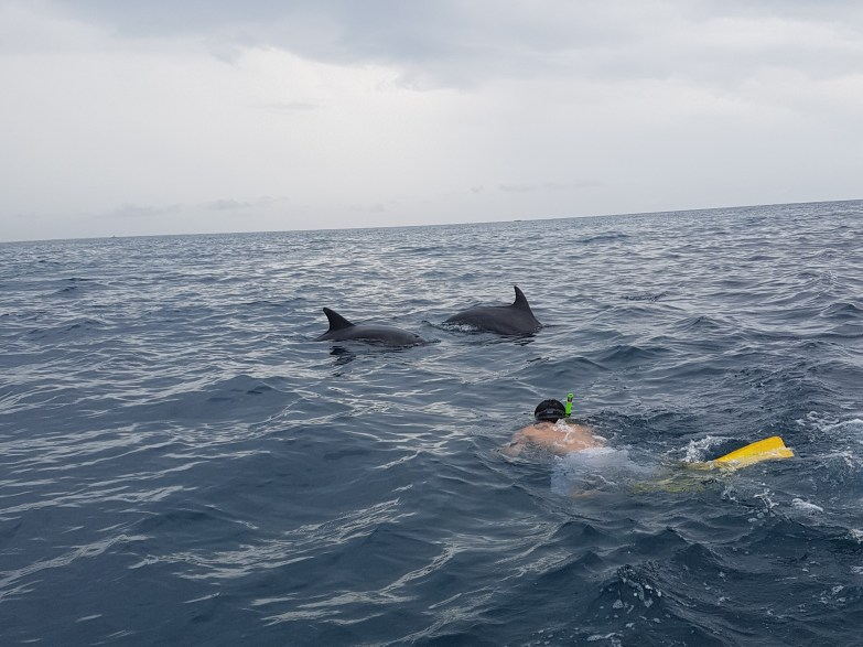 Swimming with Dolphins in Zanzibar