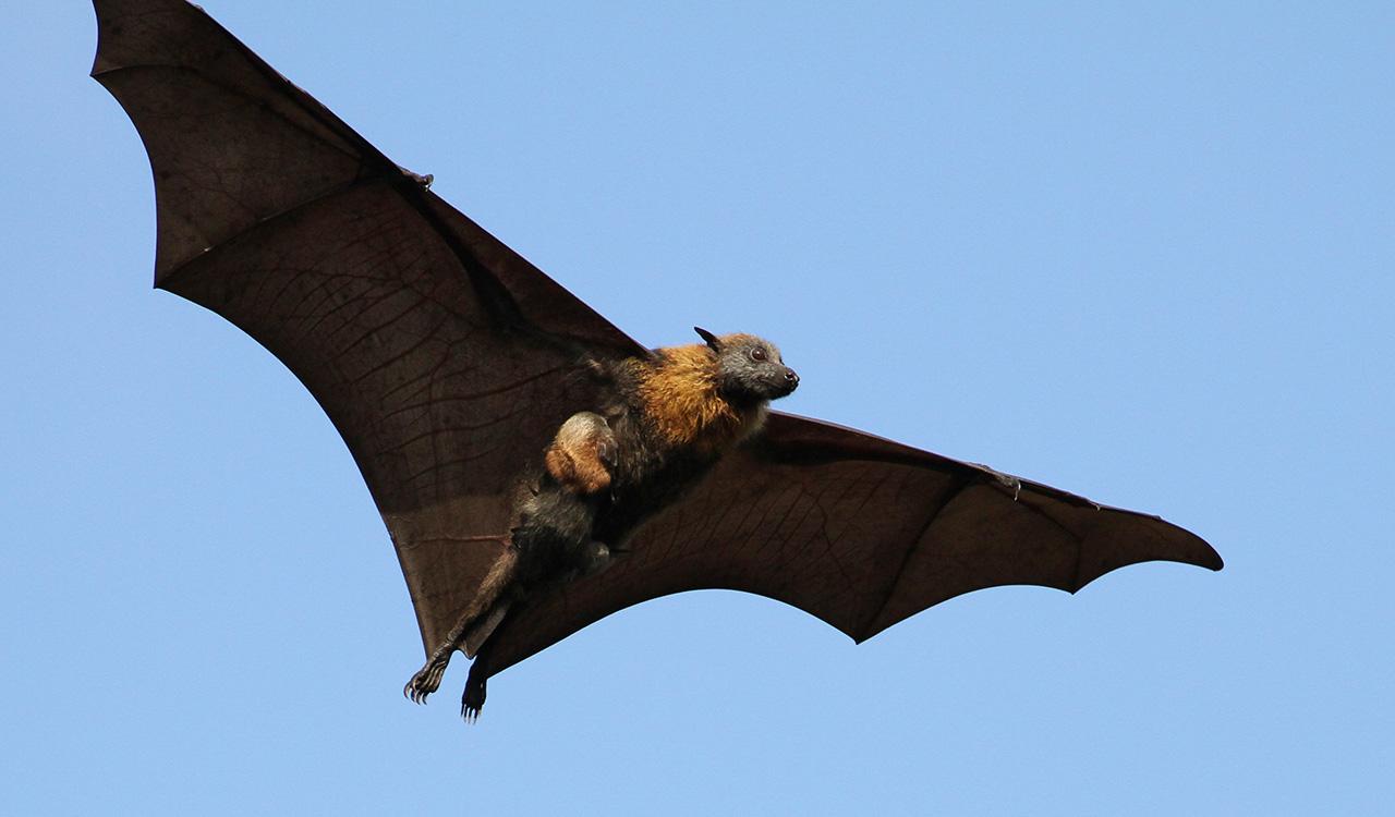 Birds and bats 13
