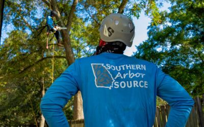 Solia Media Creates Video for Southern Arbor Source Tree Service