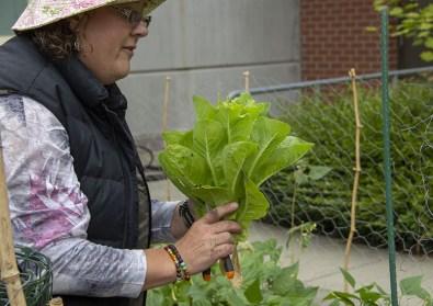 Adrienne admires a fresh head of lettuce.