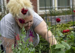 Liz harvesting pole beans, which share their space with blooming poppies.