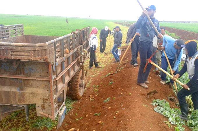 SYRIE AGRO 680