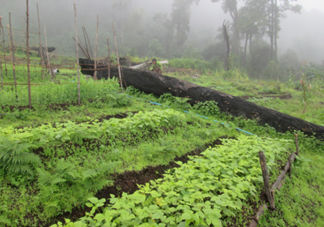 Jardins-potagers-collectifs